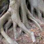 les bois exotiques