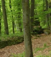tournage sur bois vert
