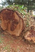 chêne pour tournage sur bois