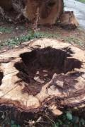 bois de tourneur